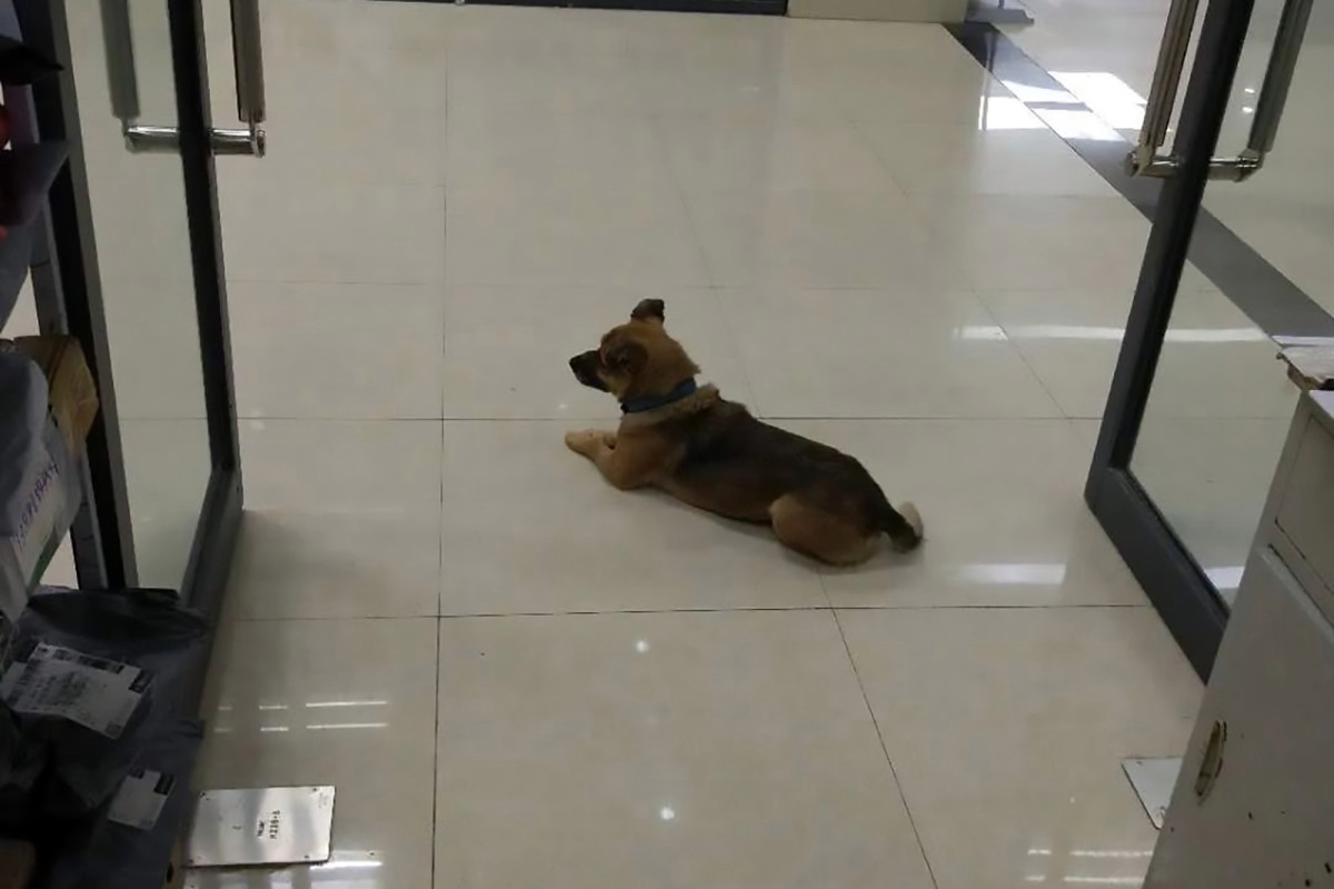 Dog Wuhan waits in hospital after death of owner's corona virus