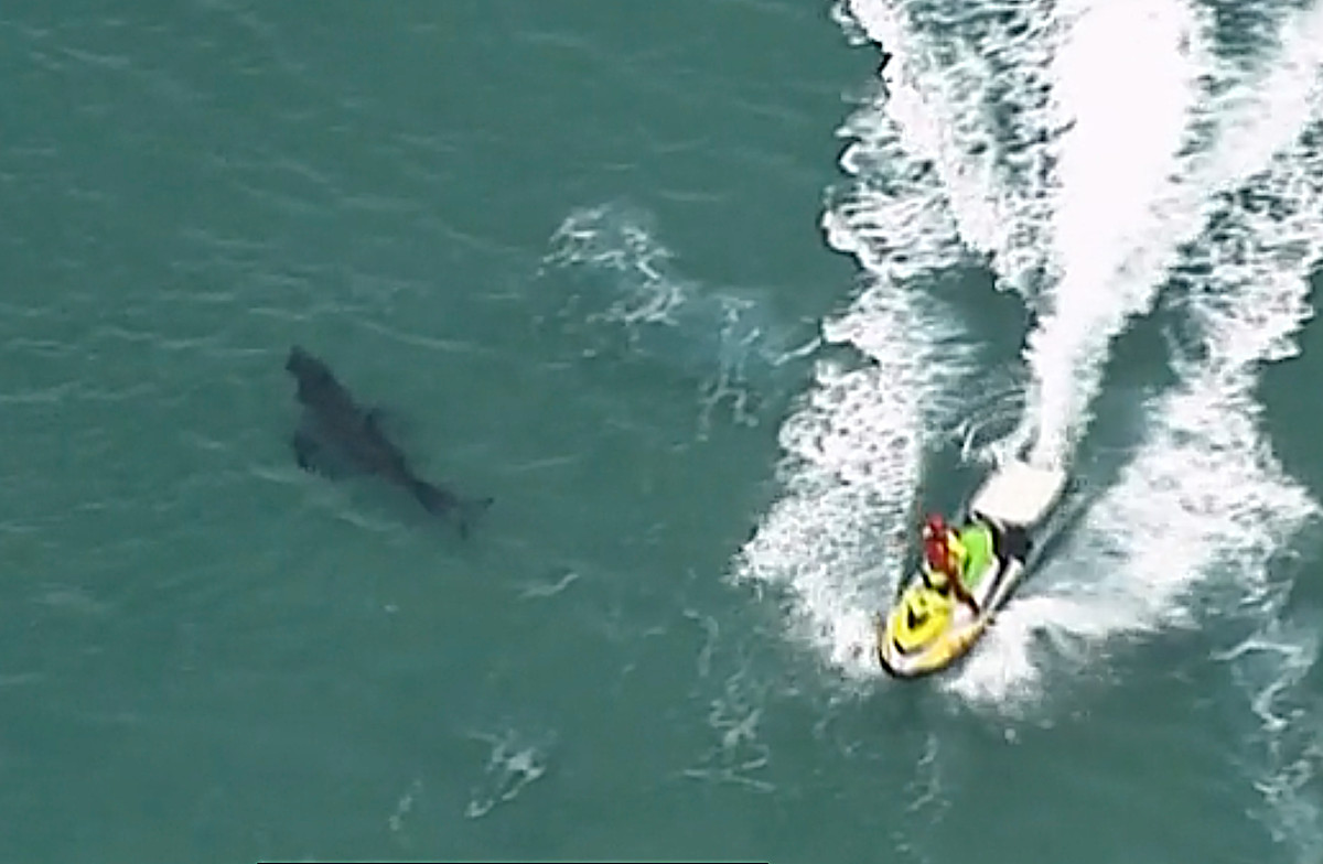 The surfer was killed by a 10-foot white shark in Australia