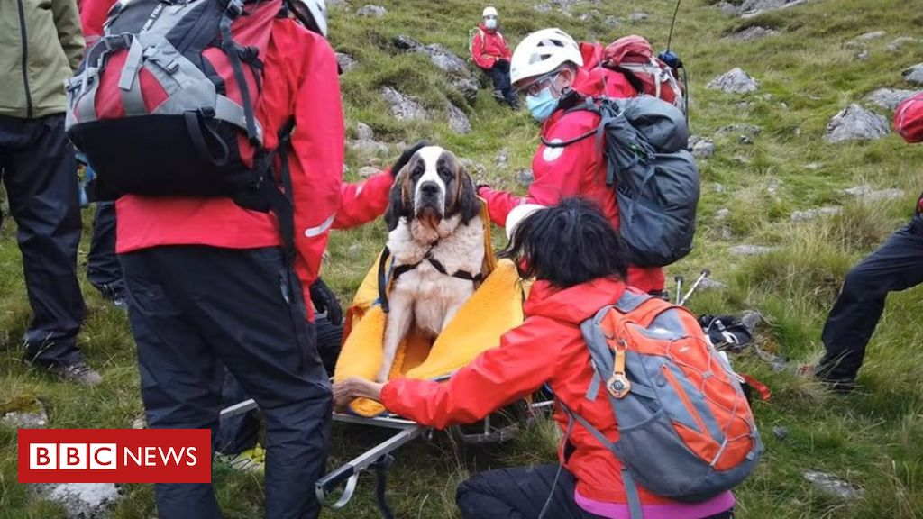 Scafell Pike: Tables turned as St Bernard needs mountain rescue
