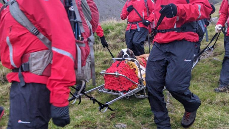 Daisy is the first St Bernard the team has rescued. Pic: Wasdale Mountain Rescue Team