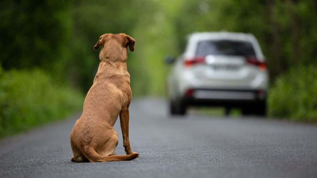 Tens of thousands of dogs could become homeless due to the coronavirus pandemic
