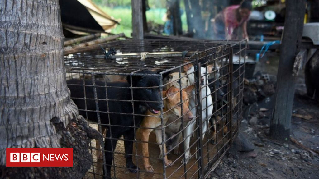 Dog meat: First Cambodian province bans sale and consumption