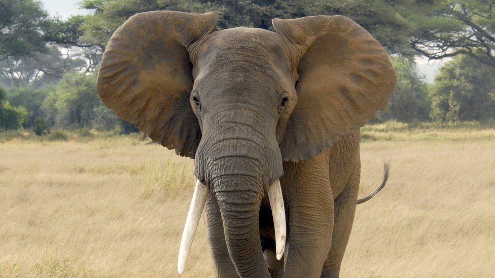 Hundreds of elephants found dead in Botswana
