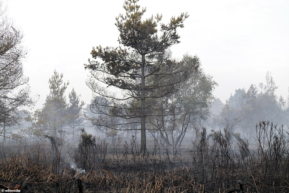 Firefighters battling a huge wildfire in Surrey have today told evacuated millionaire families not to return to their £2million homes after huge flames destroyed 150 acres of countryside
