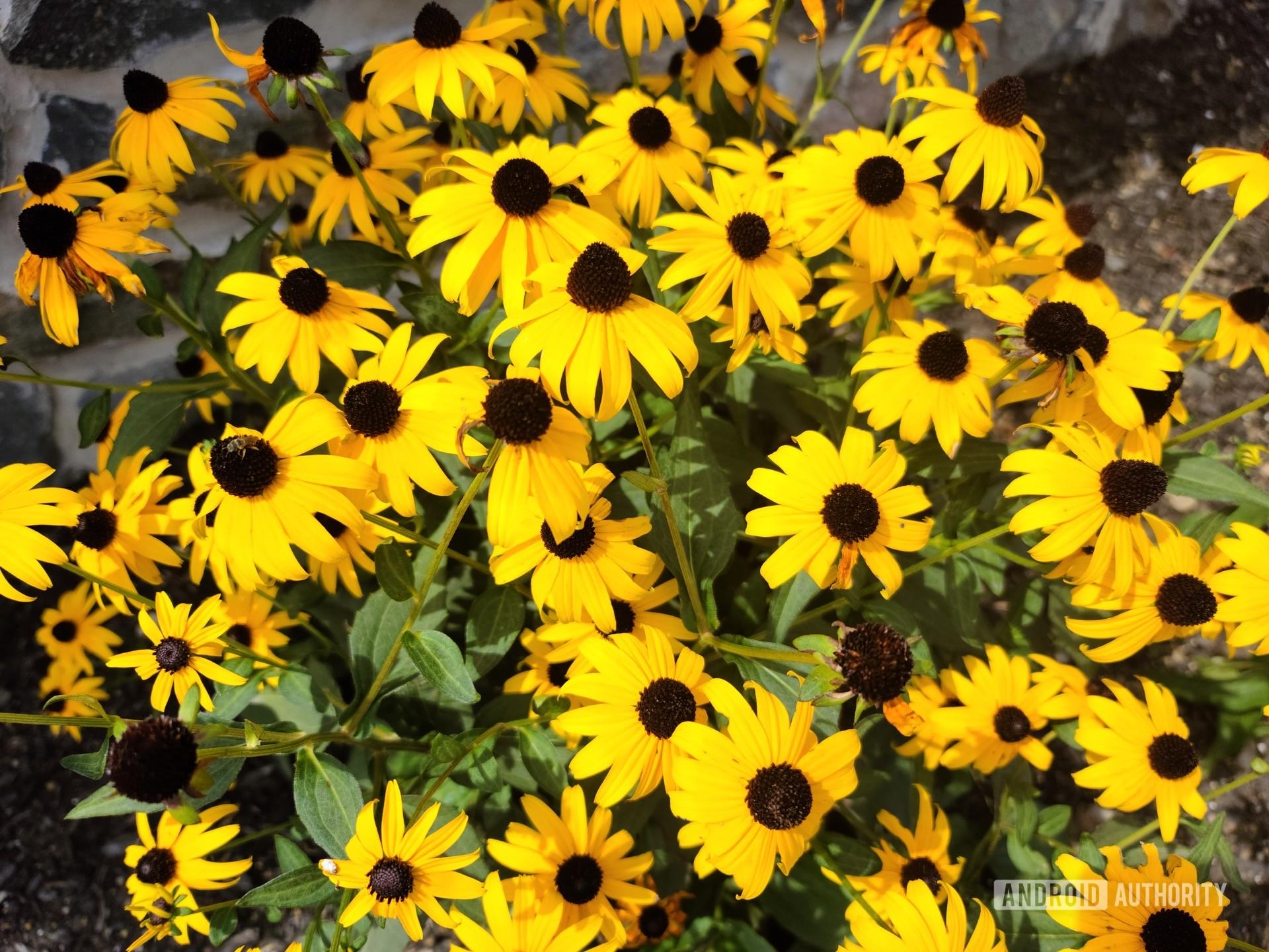 Samsung Galaxy S20 Ultra photo sample flowers