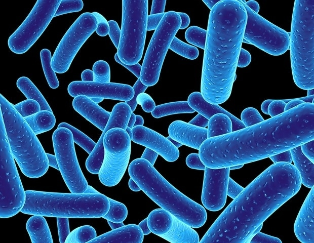 Researchers discover how gut bacteria help the immune system to battle cancerous tumors