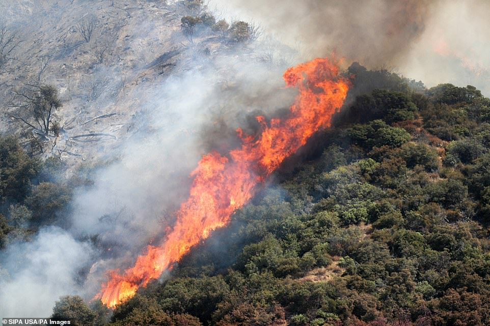 A wildfire is pictured moving up the San Bernardino National Forest hill on Sunday