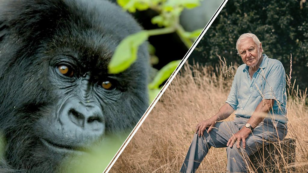 Sir David Attenborough warns of the extinction of the species