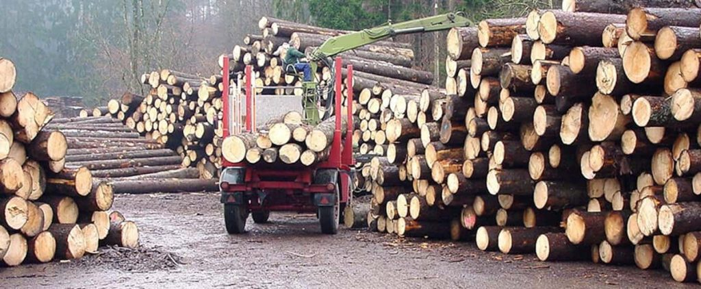 In Quebec, almost twice as many trees are cut down in 60 years