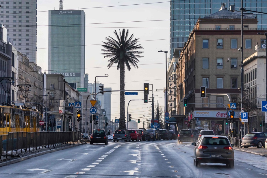 The tallest, lone palm tree in Warsaw comes of age