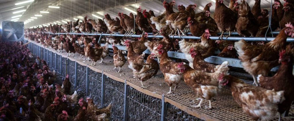 H5N8 avian influenza: first case transmitted to humans