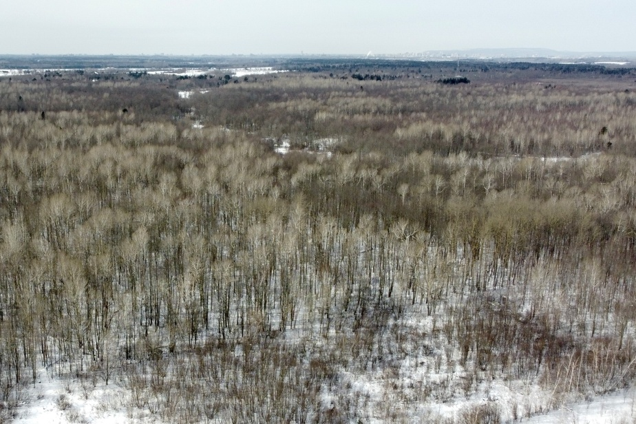 Ottawa |  Nine Algonquin First Nations oppose the housing project