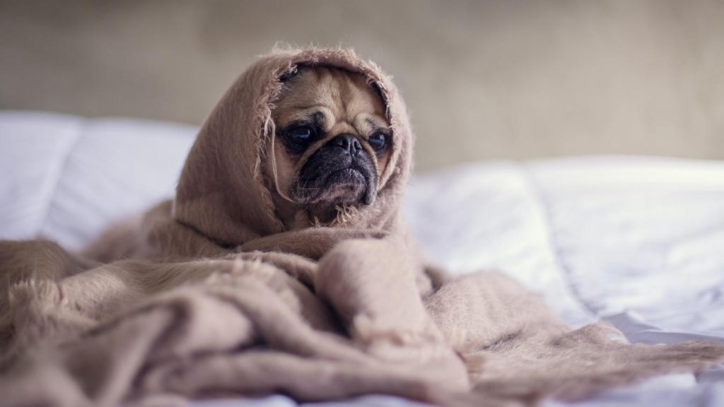 Selon le CH Alpes-Léman, environ 40% des Français sont touchés par des troubles du sommeil, notamment l'insomnie.