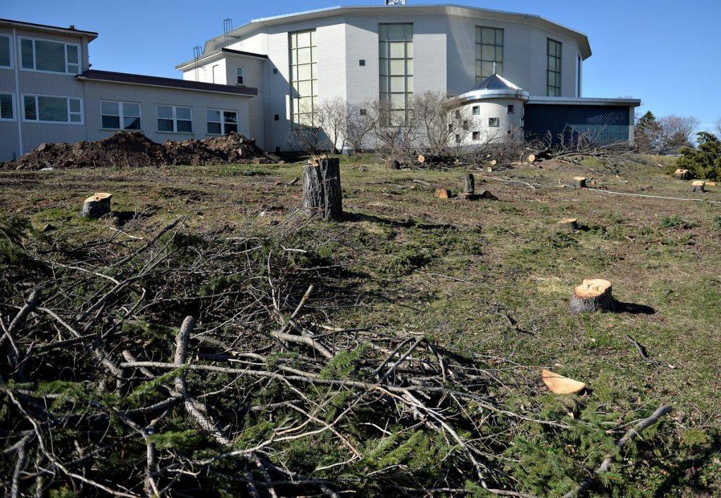 Tree cutting suspension at St. Louis-de-France Church |  Capital |  News |  The sun
