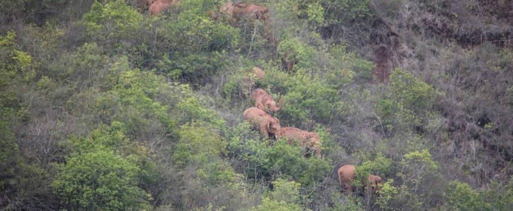 China: Running elephants waiting for Laticomer