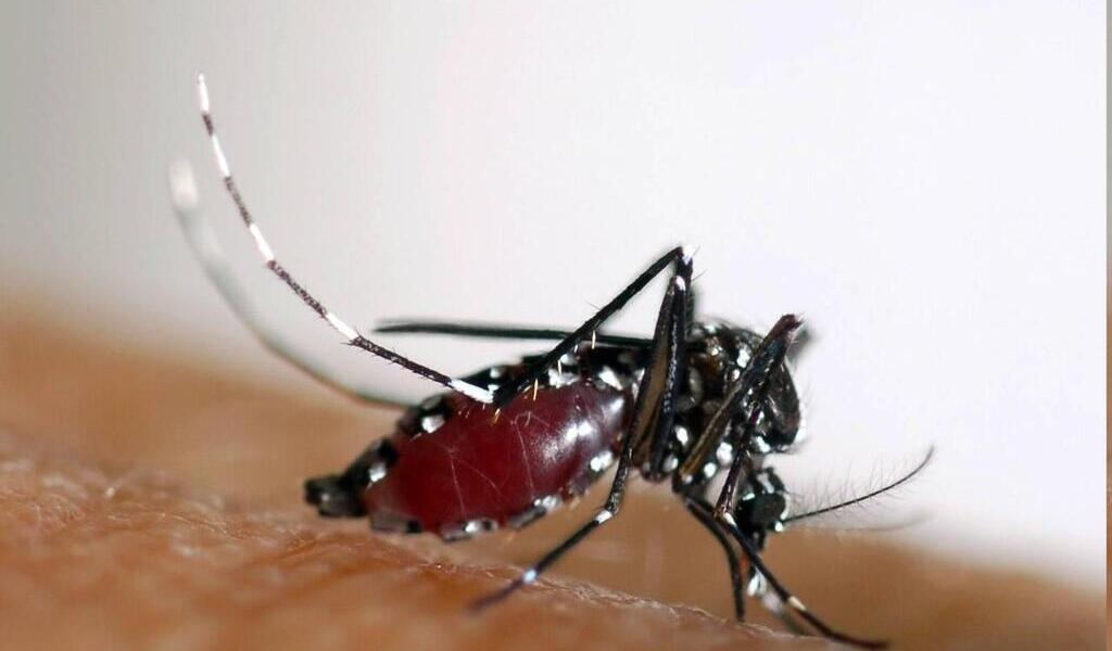 Nearly 2,000 dengue fevers a week in Reunion: Hospitals asking for help