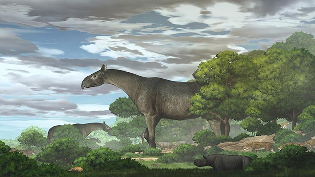 The hitherto unknown giant rhinoceros had a population of 26.5 million years ago in China