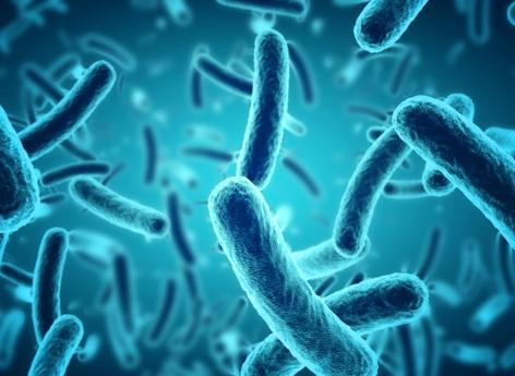 What is the role of bacteria in aging?