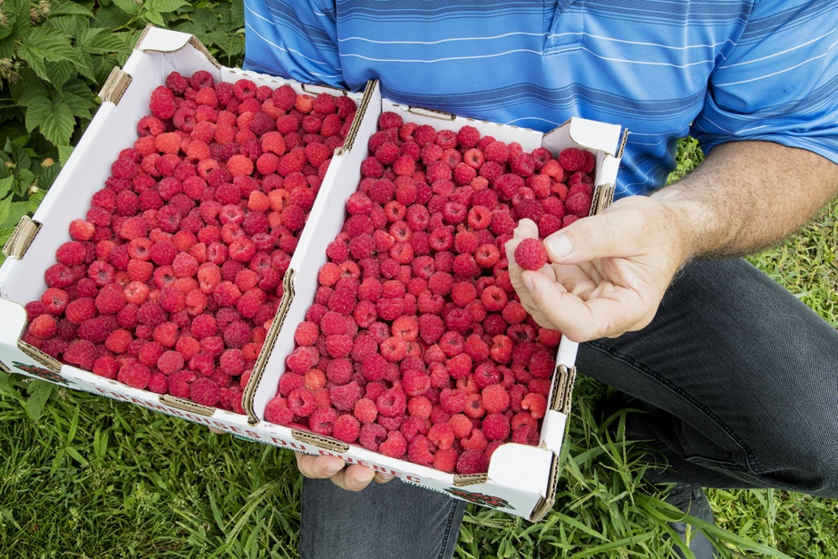 Ottawa considered allowing more pesticides on the berries