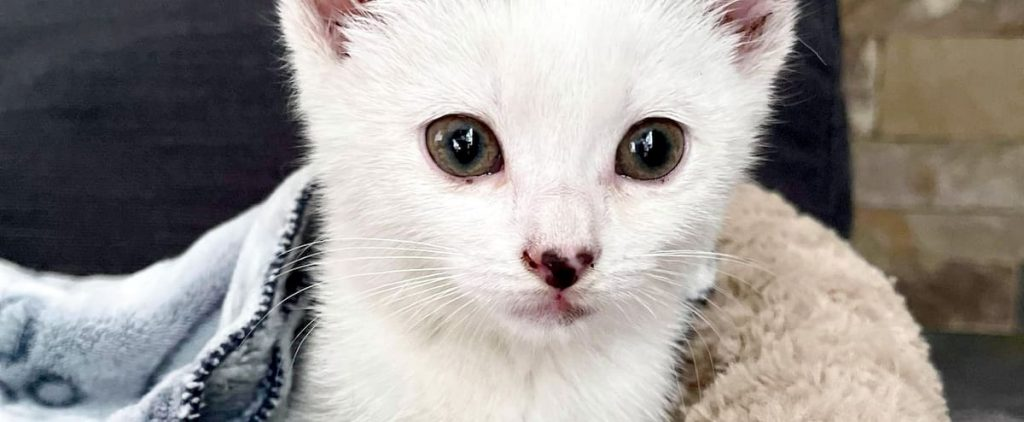 Animal cruelty: A cat escapes from an SUV on the 20th