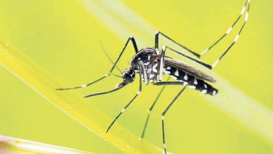 In Lot, it was the time of the tiger mosquitoes