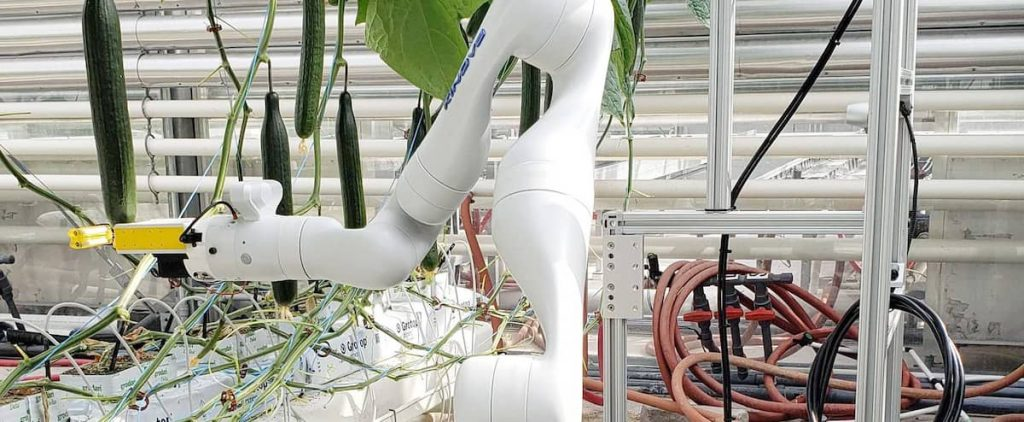 Robots will soon be able to grow greenhouse vegetables