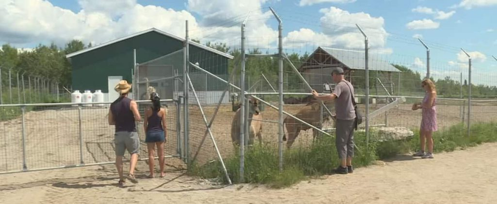 Allegations of animal cruelty: No charges against Ju de Flardo