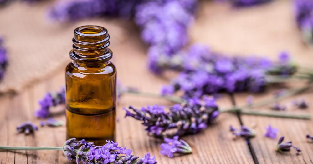 Lavender Oil Endocrine Destroyer?