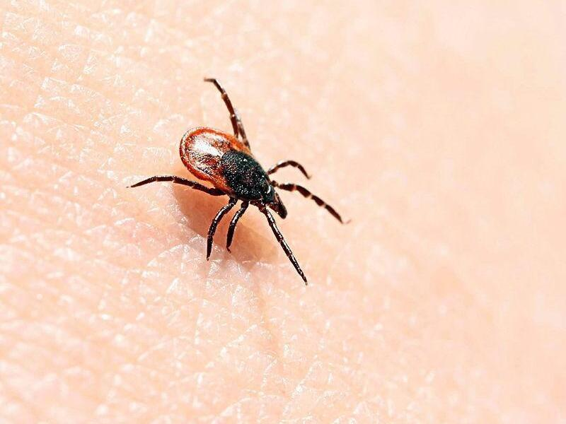 Lyme disease.  Ron Order calls for the doctor's radiation