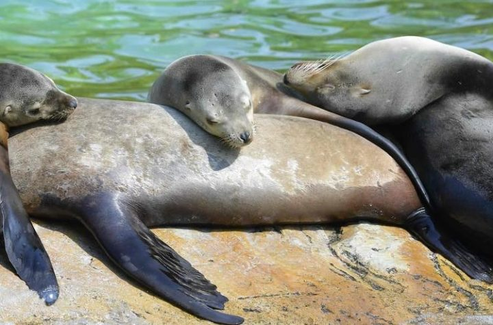 Mexico: Colony of sea lions revolt against their extinction