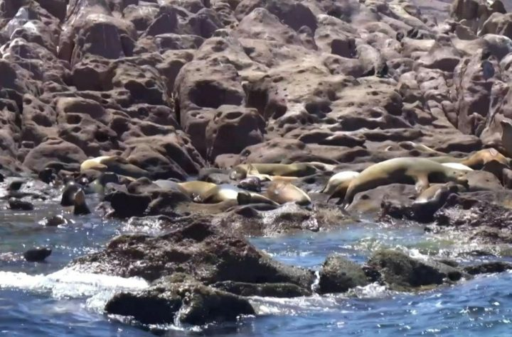 Mexico |  The Sea Lions Colony is rebelling against their extinction