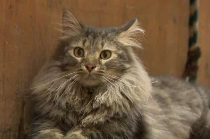 Quebec SPA: Farms to protect cats