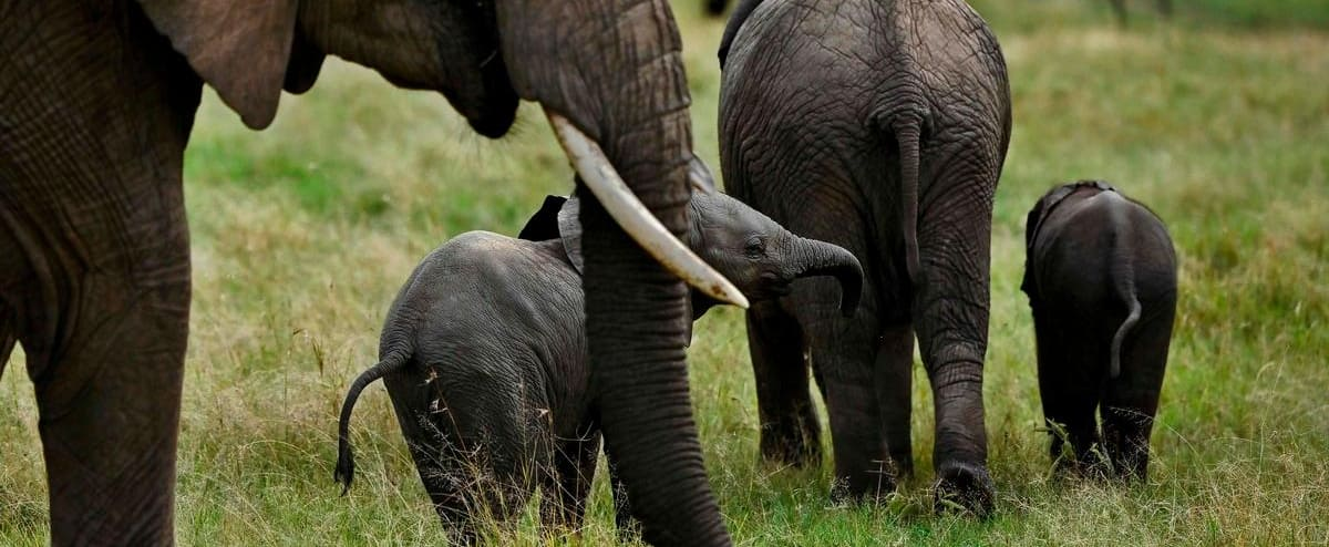 South Africa: Suspected poacher trampled by elephant